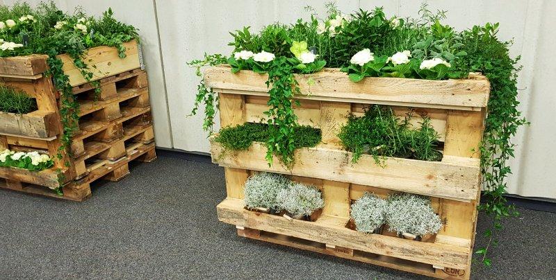 Pflanzen Konzept mieten