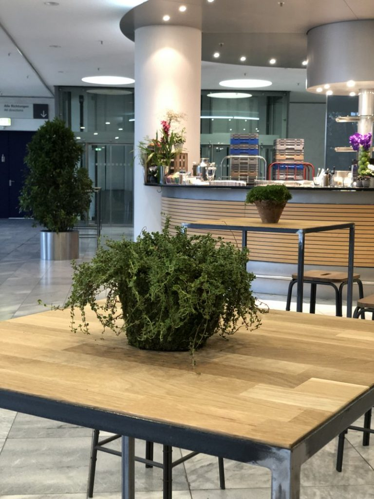 Pflanzen auf Tischen